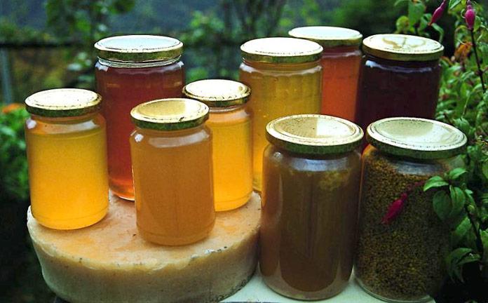 Miele della Liguria