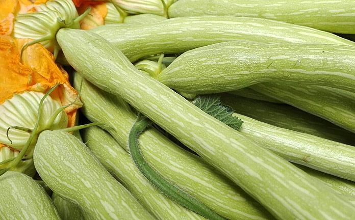 Zucchino trombetta